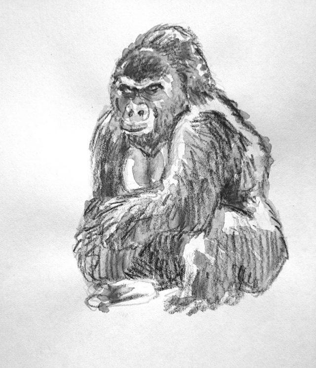 croquis-gorille